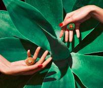 cactusdecartier